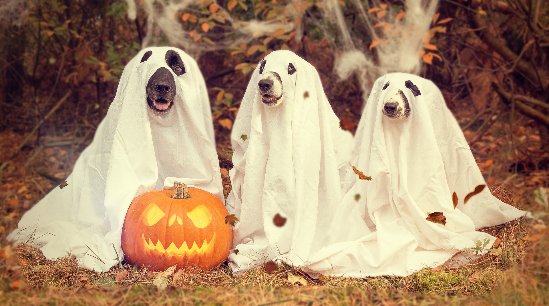 dogs dressed in white ghost sheets for halloween